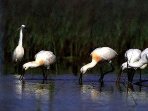 Parco del delta del Po Spatole