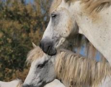 A cavallo nel Parco del Delta del Po